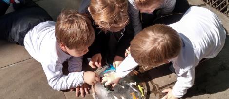 """Descobertas sobre """"a vida no gelo"""" são realizadas pelo Nível 3B da Educação Infantil da IENH"""