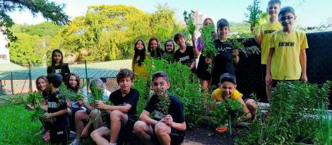 Estudantes realizam a última colheita de temperos e chás do ano na Horta Escolar do Pindorama
