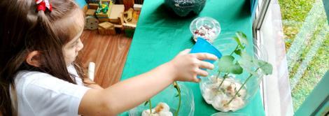 Literatura motiva cultivo de feijões na sala de aula